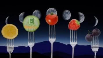 moon-diet-new
